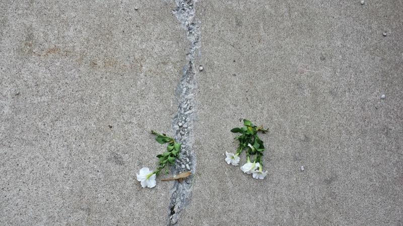 20140714_flowers